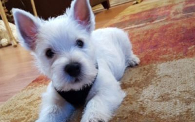 A New Puppy in the House – New Beginnings Dog Training Blog
