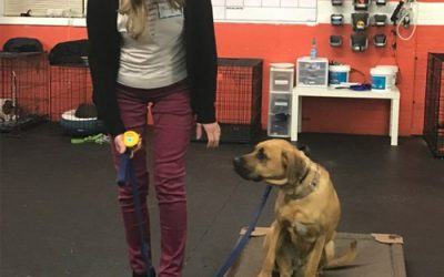 A Well Trained Dog – New Beginnings Dog Training Blog