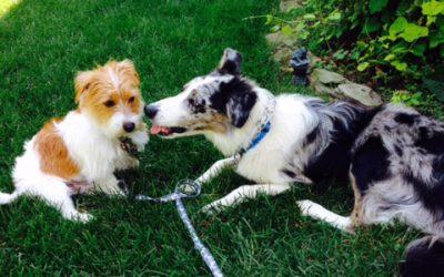 Dog Training and Passing the Baton